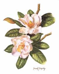 Southern Magnolia, flower for Cancer