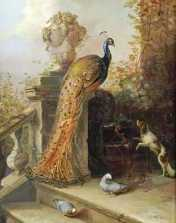 A Peacock on a Terrace