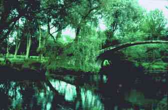 Willow Bridge